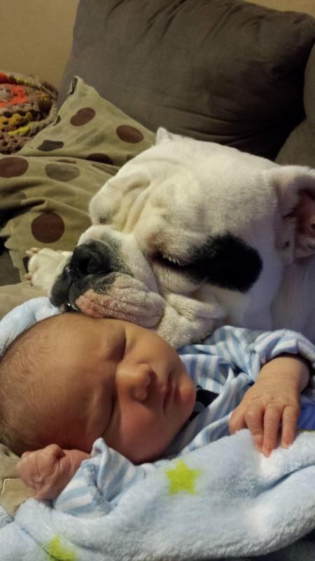 perros y bebes siesta 10