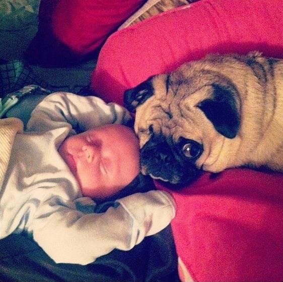 perros y bebes siesta 11