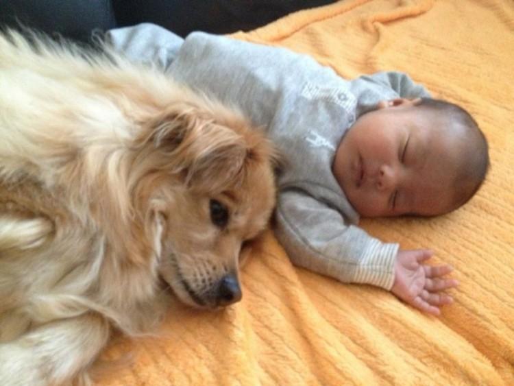 perros y bebes siesta 13