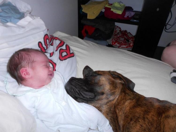 perros y bebes siesta 14