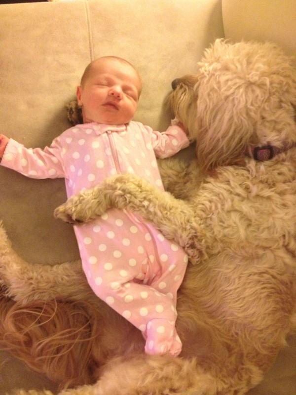 perros y bebes siesta 15