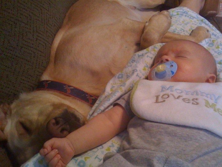 perros y bebes siesta 16