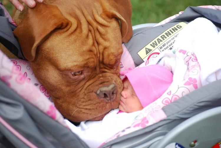 perros y bebes siesta 17