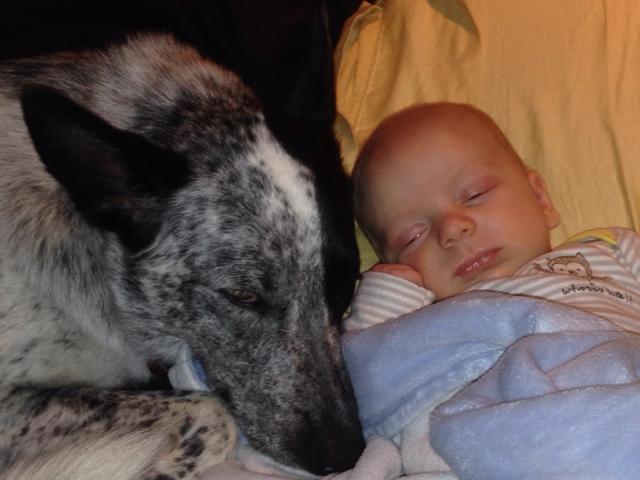 perros y bebes siesta 2