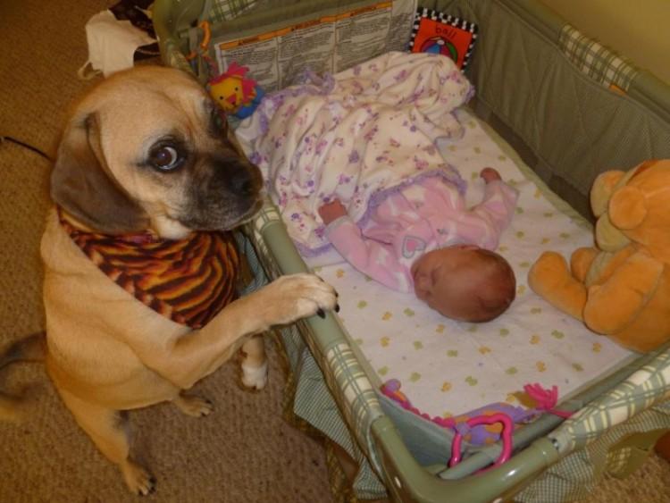 perros y bebes siesta 3