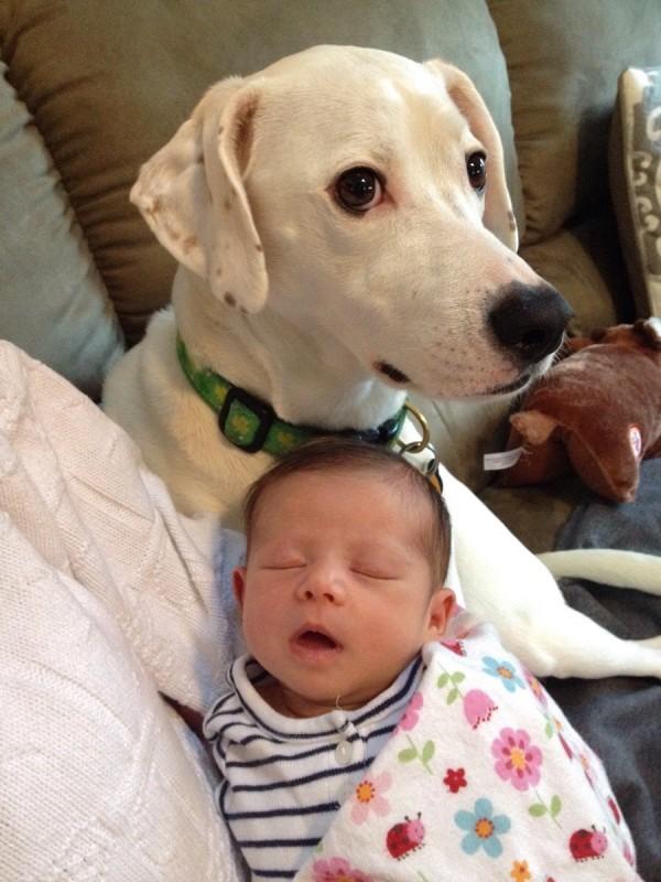 perros y bebes siesta 4