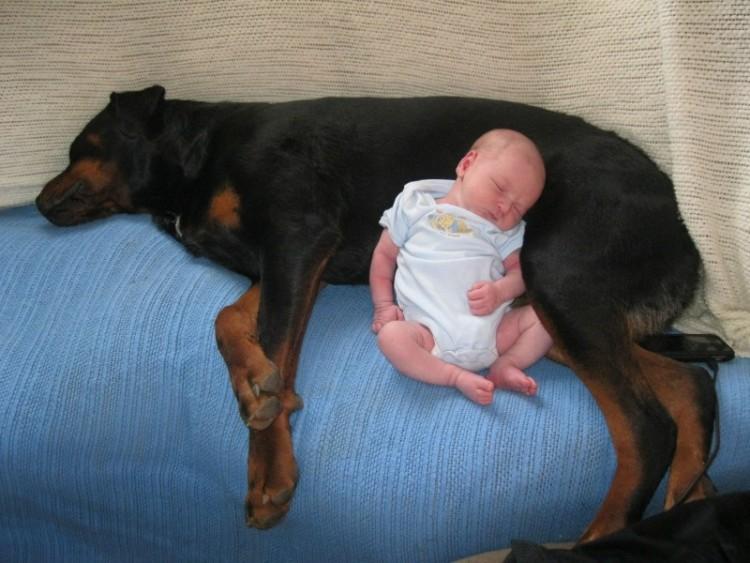 perros y bebes siesta 8