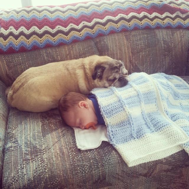 perros y bebes siesta 9
