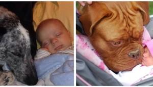 perros y bebes siesta id