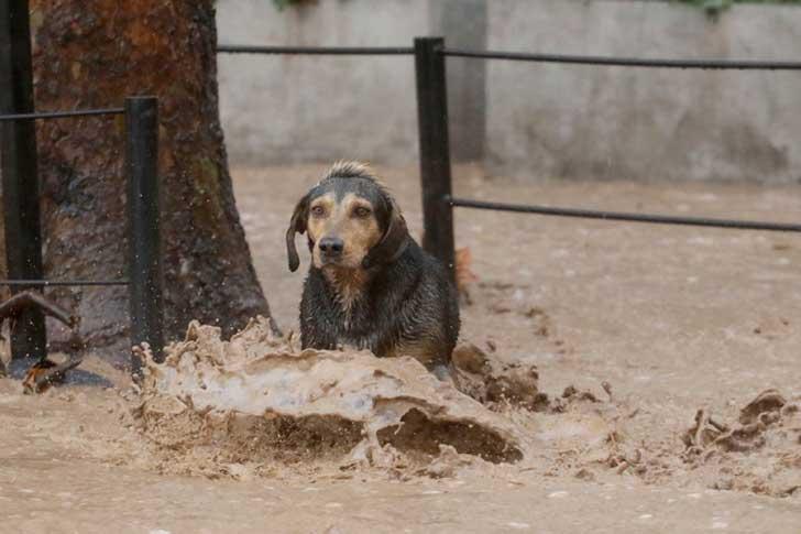 policía ayuda perro en inundación 1