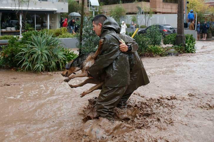 policía ayuda perro en inundación 7