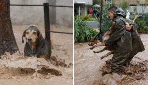policía ayuda perro en inundación 8