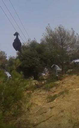 rescate-de-cabra-colgada-en-cable7