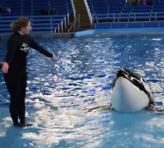 sakari orca seaworld