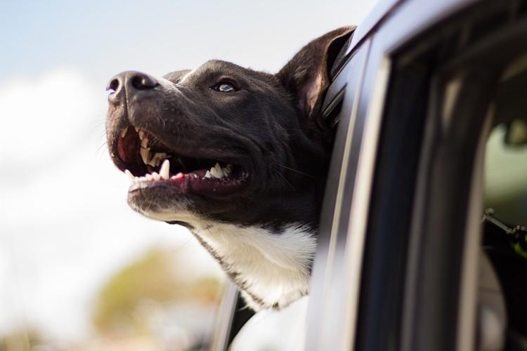 salir con amantes de perros 1
