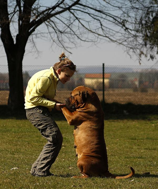 salir con amantes de perros 3