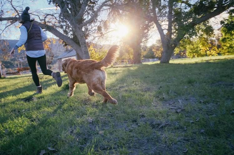 salir con amantes de perros 4