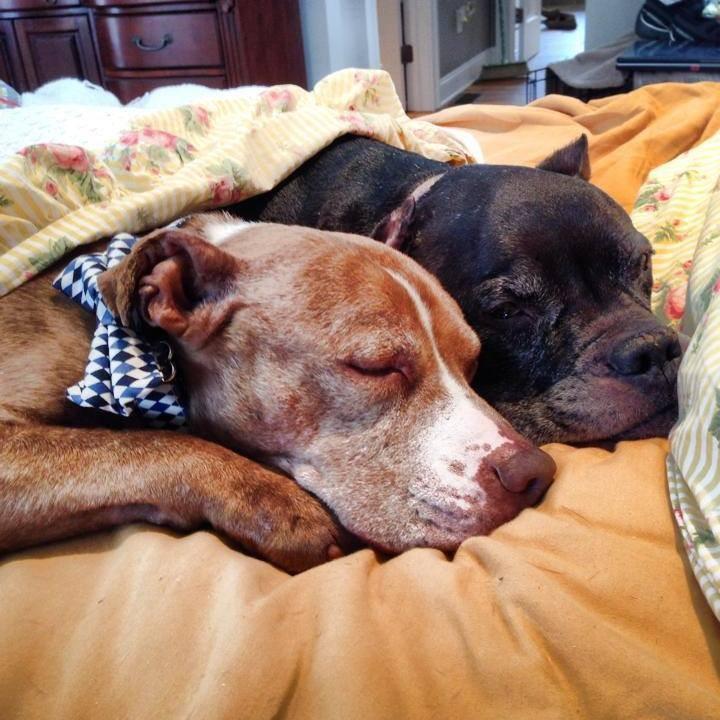segunda cama para perros durmiendo