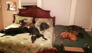 segunda cama para perros imagen destacada