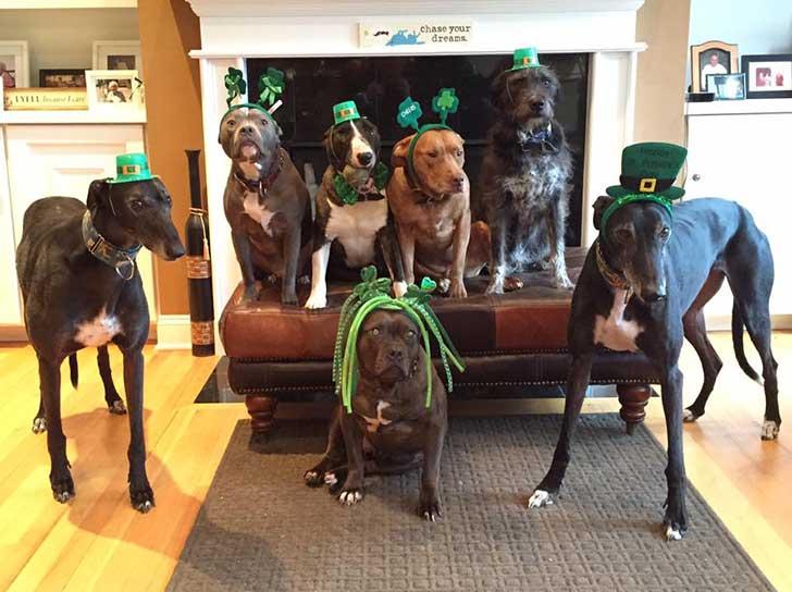 segunda cama para perros suerte irlandesa