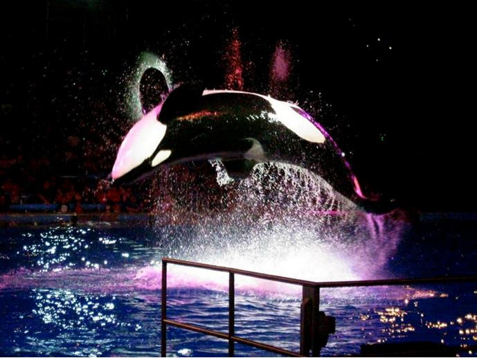thuar orca seaworld