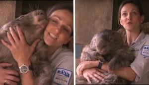 wombat mas grande id