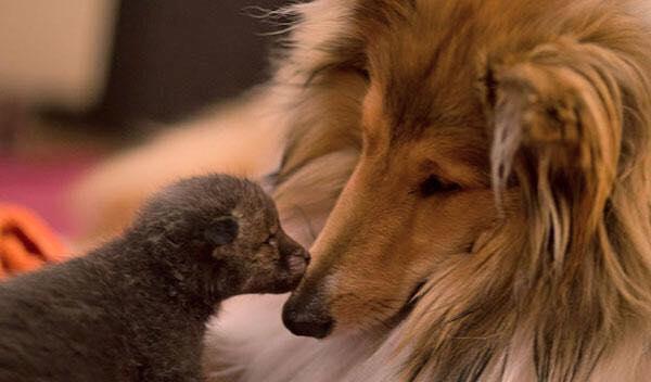 zorro-adoptado-perro2