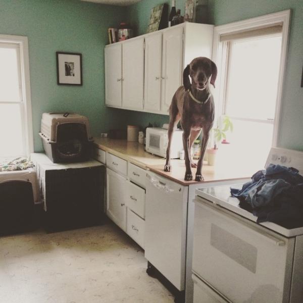 15-cosas-de-perros14