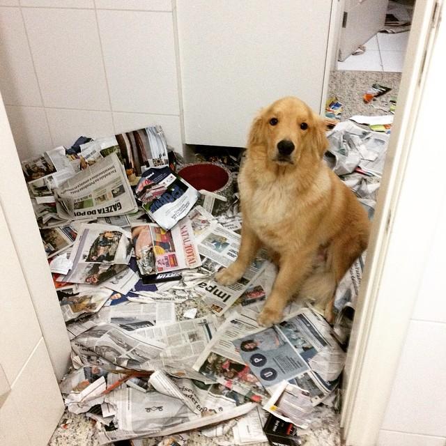 15-cosas-de-perros15