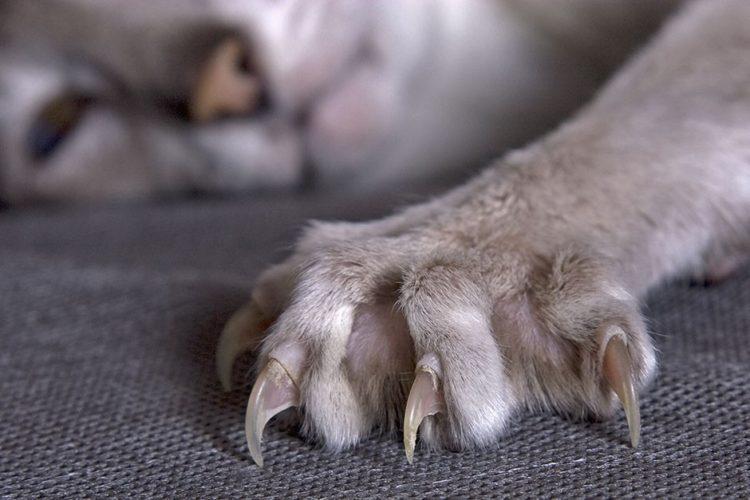 Garra de gato 2