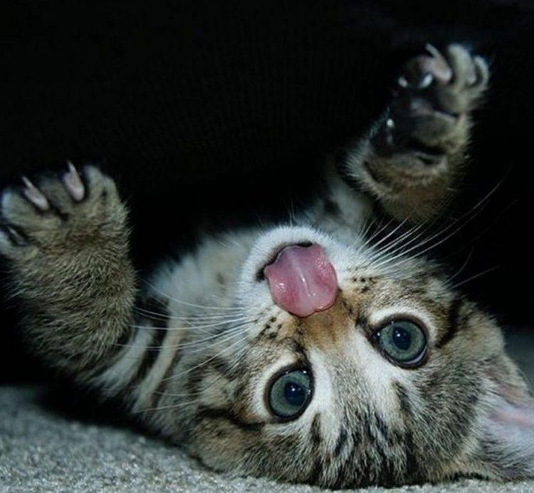 Garra de gato 3