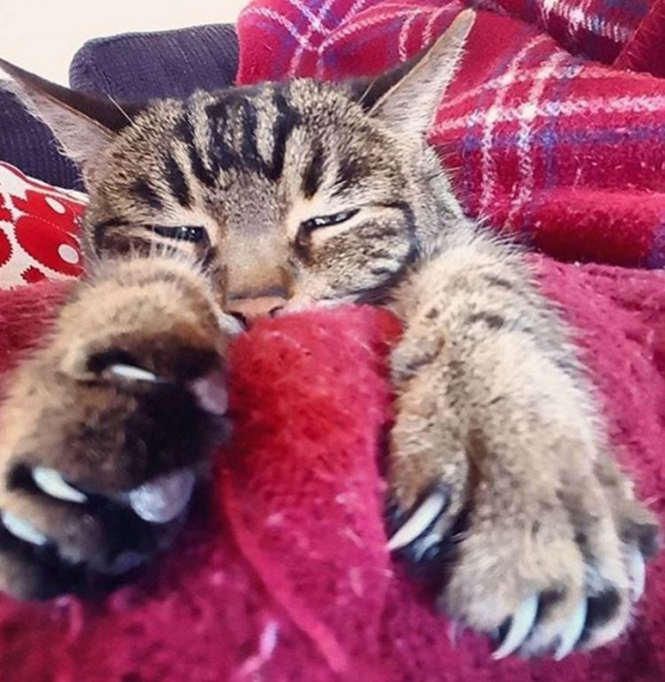Garra de gato 7