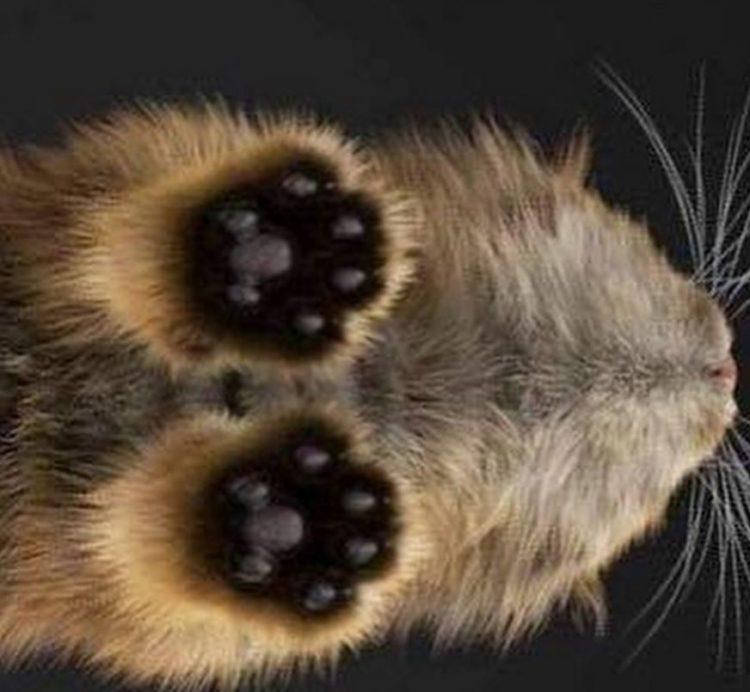 Garra de gato 8