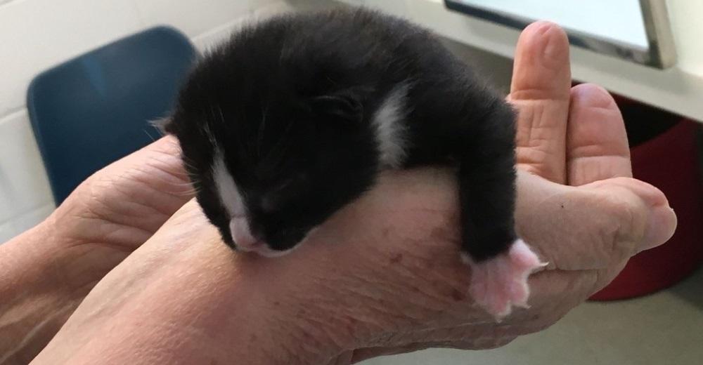 Gatito-bebe-atrapado-3