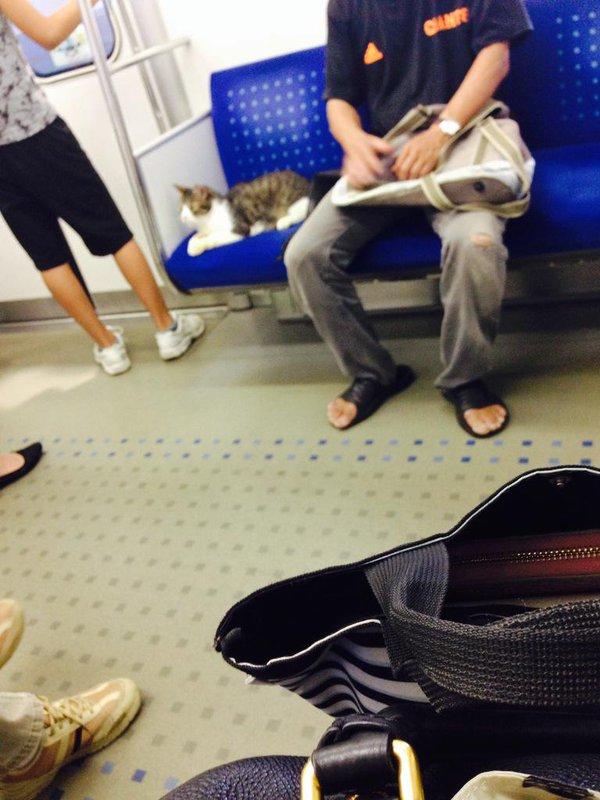 Gato en Metro 10