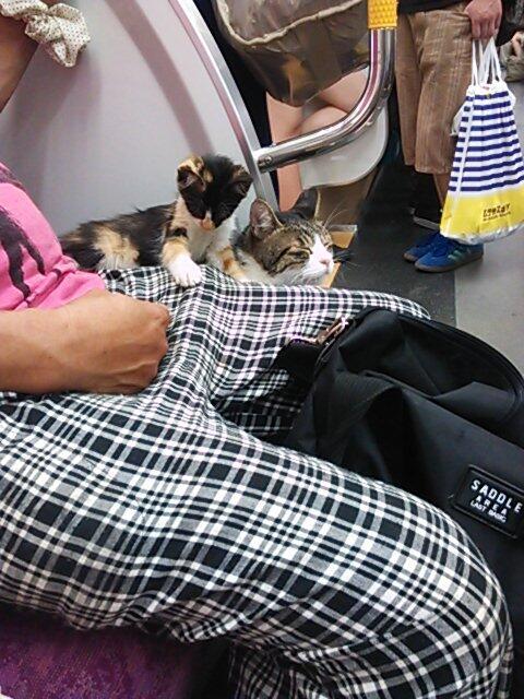 Gato en Metro 11