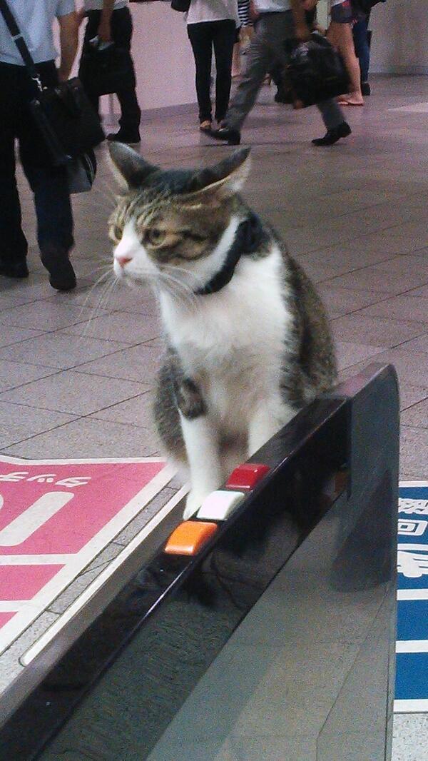 Gato en Metro 13