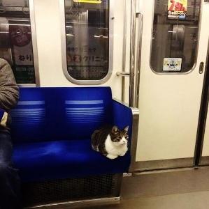 Gato en Metro 2