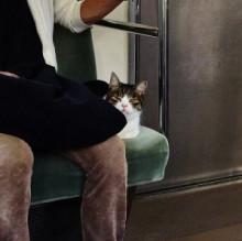 Gato en Metro 3