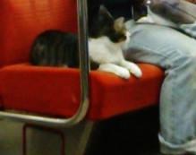 Gato en Metro 4