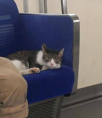Gato en Metro 8