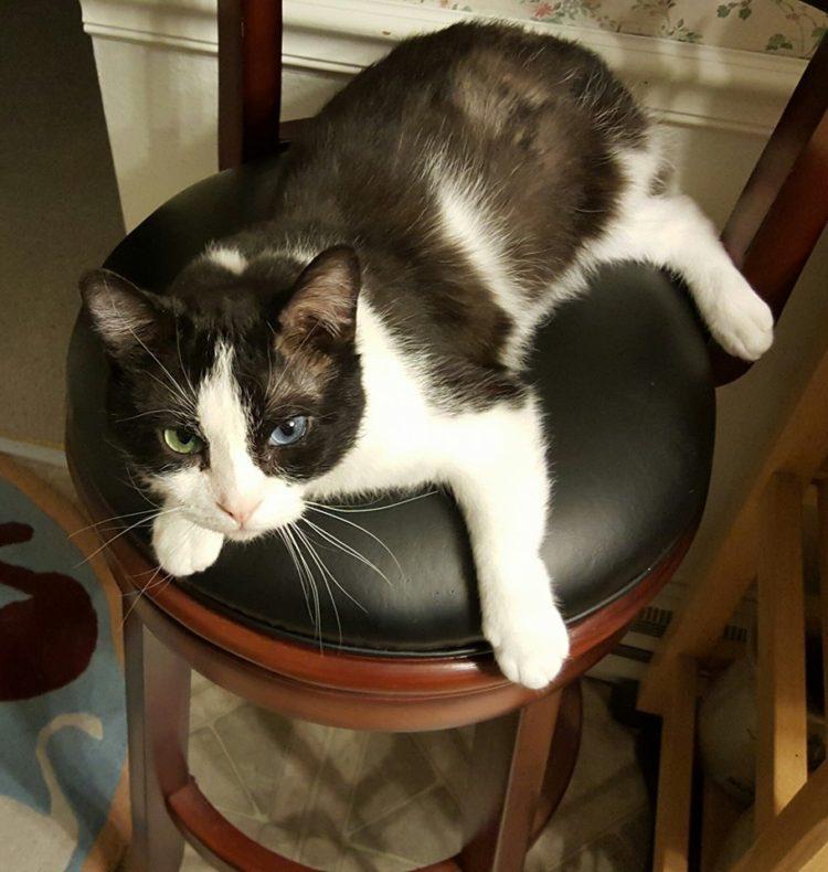 Gato rescatado 6