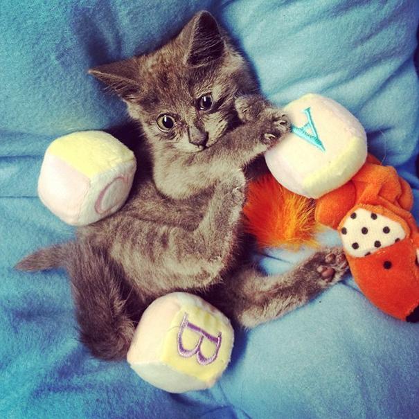 Gato-sorprendido 1