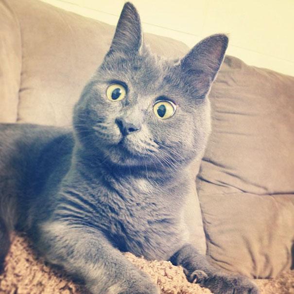 Gato-sorprendido 12