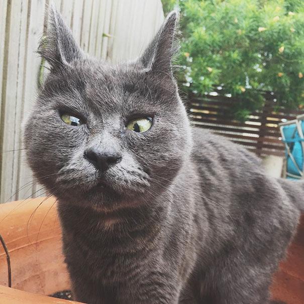 Gato-sorprendido 14