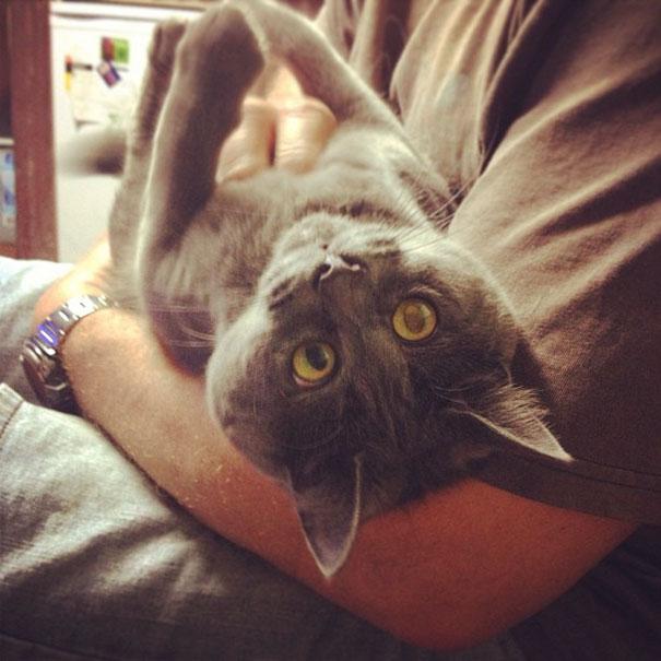 Gato-sorprendido 15