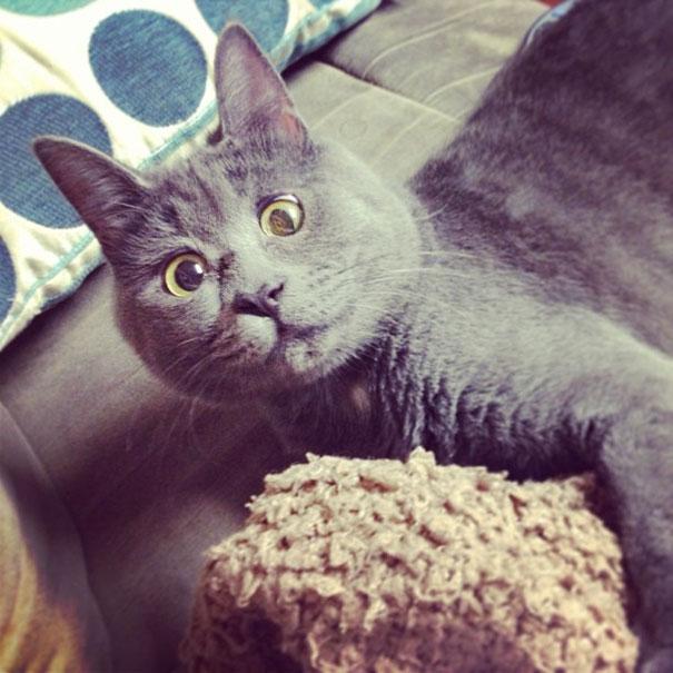 Gato-sorprendido 3