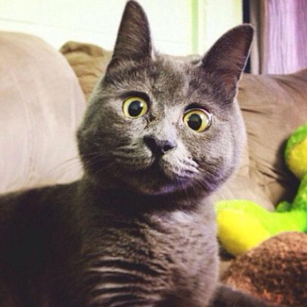 Gato-sorprendido 4