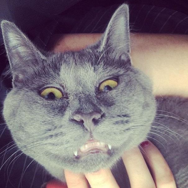 Gato-sorprendido 7