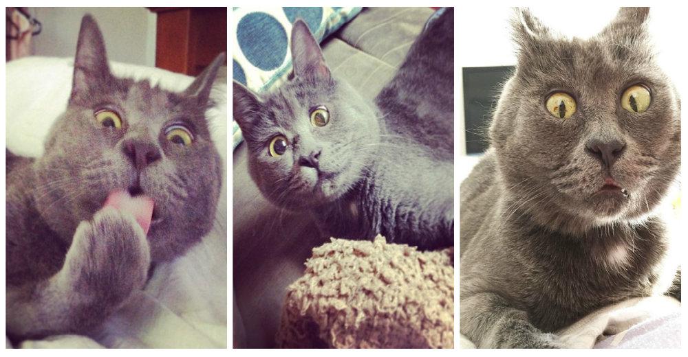 Gato-sorprendido-portada
